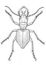Imágenes para pintar de escarabajos (10/12)
