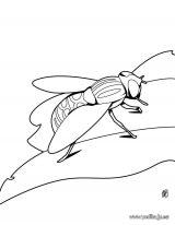 Imágenes para pintar de escarabajos (11/12)