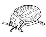 Imágenes para pintar de escarabajos (12/12)