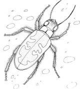 Dibujos para colorear de escarabajos (2/12)
