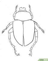 Dibujos para colorear de escarabajos (11/12)