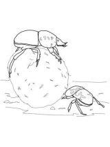 Escarabajos para colorear para niños (1/16)