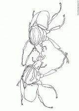 Escarabajos para colorear para niños (5/16)