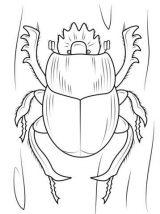 Escarabajos para colorear para niños (9/16)