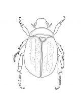Escarabajos para colorear para niños (12/16)