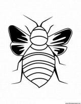 Escarabajos para colorear para niños (14/16)