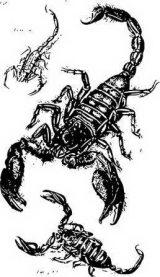 Imágenes de escorpiones para colorear (6/12)