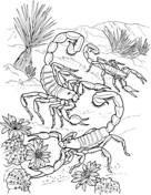 Dibujos de escorpiones para imprimir (3/12)