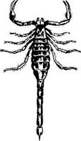 Dibujos de escorpiones para imprimir (6/12)