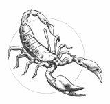Dibujos de escorpiones para imprimir (11/12)
