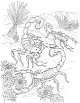 Dibujos de escorpiones para colorear e imprimir (8/8)