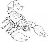 Dibujos de escorpiones de colorear (3/6)
