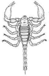 Dibujos de escorpiones de colorear (6/6)