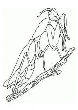 Imágenes de grillos para dibujar (6/12)