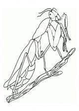 Grillos para dibujar fáciles (11/20)