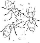 Hormigas para colorear (8/16)