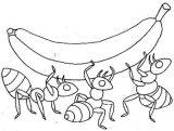 Dibujos de hormigas para colorear (2/16)