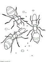 Dibujos de hormigas para colorear (8/16)