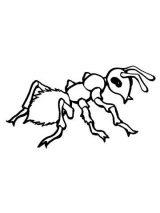 Dibujos de hormigas para colorear (15/16)