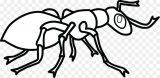 Dibujos de hormigas para colorear (16/16)