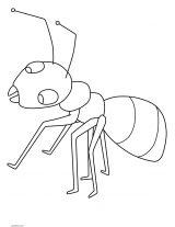 Imágenes de hormigas para colorear (2/16)