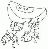 Imágenes de hormigas para colorear (11/16)