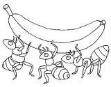 Imágenes de hormigas para colorear (14/16)