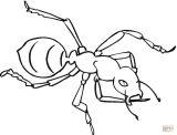 Imágenes de hormigas para dibujar (7/16)