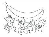 Imágenes de hormigas para dibujar (11/16)