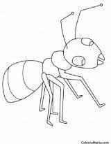 Dibujos de hormigas fáciles (2/7)
