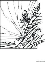 Imágenes de libélulas para colorear (7/16)