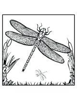 Imágenes de libélulas para imprimir (1/12)