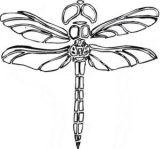 Imágenes de libélulas para imprimir (9/12)