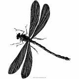 Imágenes de libélulas para imprimir (12/12)
