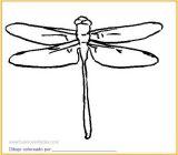 Dibujos de libélulas para colorear (4/15)