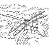 Dibujos de libélulas para colorear (7/15)