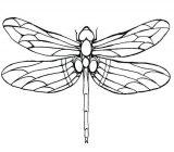 Dibujos de libélulas para colorear (14/15)