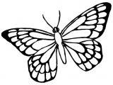 Mariposas para colorear (4/16)