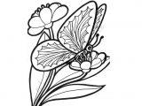 Mariposas para colorear (16/16)