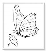 Mariposas para colorear e imprimir (7/16)