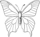 Mariposas para colorear e imprimir (13/16)