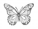 Imágenes de mariposas para pintar (2/16)