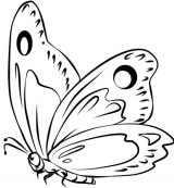 Imágenes de mariposas para pintar (6/16)