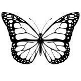 Dibujos de mariposas para pintar (1/11)