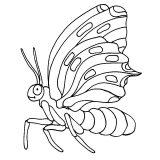 Dibujos de mariposas para pintar (8/11)