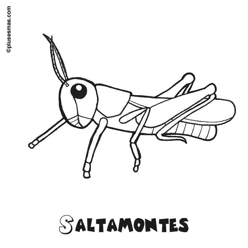 Saltamontes Para Colorear 2019 Imágenes De Saltamontes